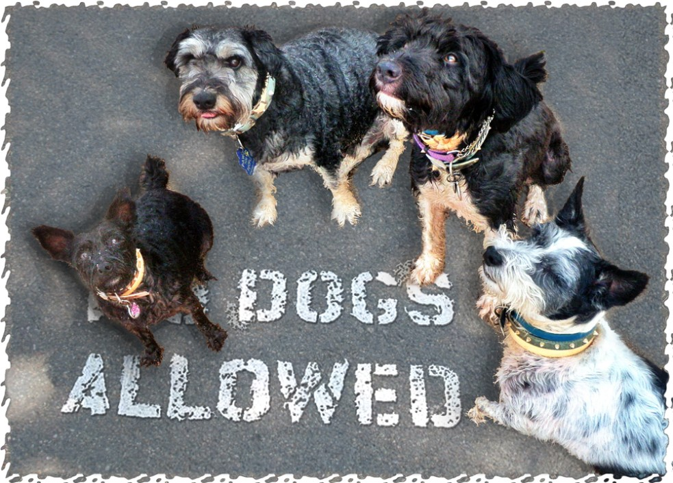 dogs-allowed-sign.jpg.opt983x705o0,0s983x705